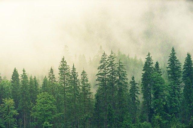 typický smrkový les